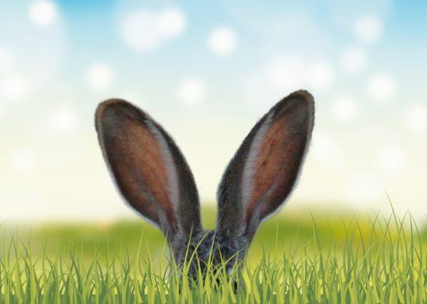 Osterhase, Ohren, Ostern, Frohe Ostern, Marketing, Werbung
